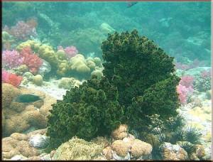 ปะการัง ร่องน้ำจาบัง