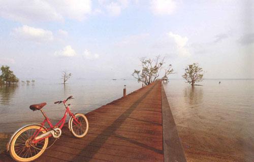 สะพานไม้ทอดยาวไปถึงกลางทะเล