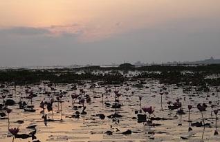 นั่งเรือดูนกเขตห้ามล่าสัตว์ป่าทะเลน้อย อำเภอควนขนุน จังหวัดพัทลุง