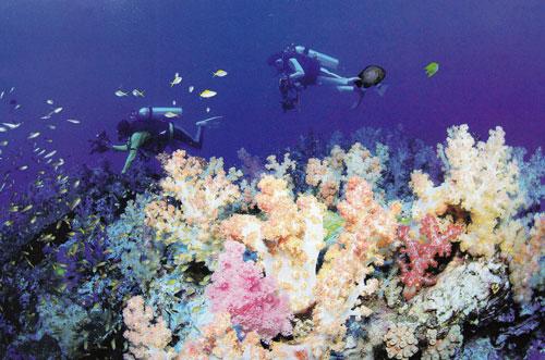 เกาะปะการังอ่อนที่เกาะแบล็กร็อก