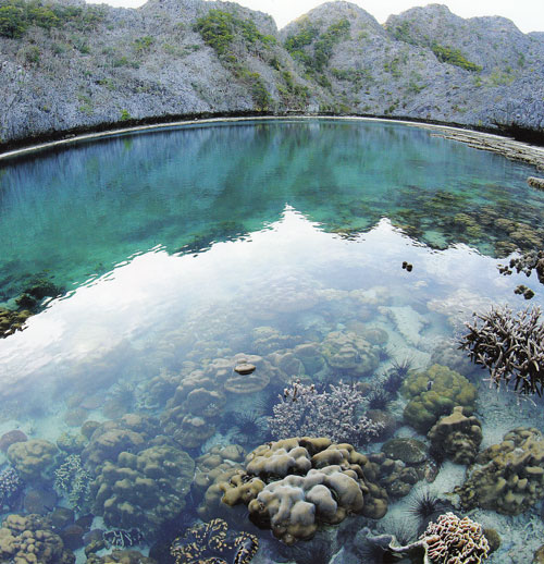 ดำน้ำดูปะการัง หมู่เกาะทะเลพม่า