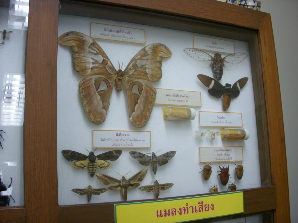 พิพิธภัณฑ์และอุทยานแมลง มหาวิทยาลัยเกษตรศาสตร์