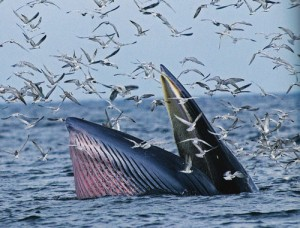 ท่องเที่ยวชมวาฬบรูด้าและโลมาในอ่าวตัว ก