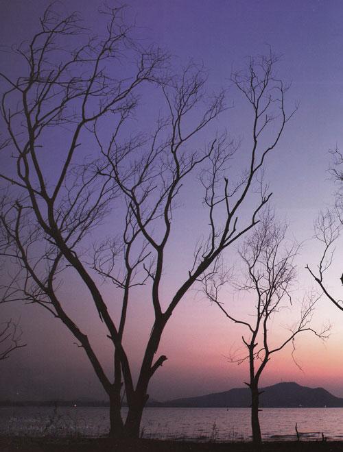 ดูนกที่เขตห้ามล่าสัตว์ป่าอ่างเก็บน้ำบางพระ ศรีราชา ชลบุรี