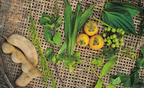 คลองจินดา ล่องลำคลอง ชมพืชผลและผืนแผ่นดิน