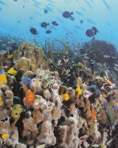เกาะเต่า ลมหายใจใต้น้ำ ดำน้ำดูปะการัง