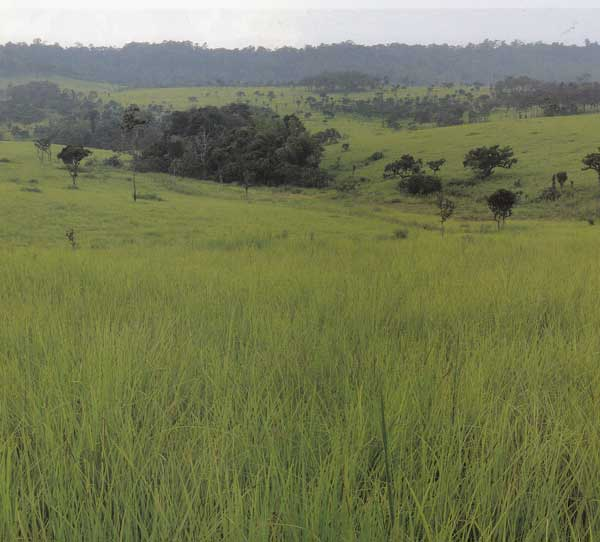 ชมทุ่งหญ้าสะวันน่าสีเขียว ทุ่งแสลงหลวง พิษณุโลก